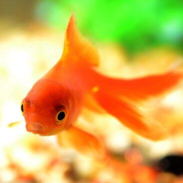 """Porozmawiajmy o marzeniach. Aleksander Puszkin """"Bajka o rybaku i rybce"""""""